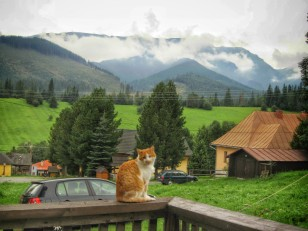 The view from the porch (with Kevin the cat)
