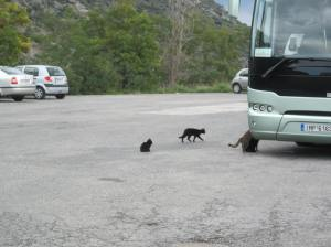 These cats were able to catch a bus at the site faster than we were,