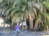Palm Grove of Leto