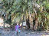 Palm Grove of Leto