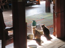 The cats of the jumping cat monestary