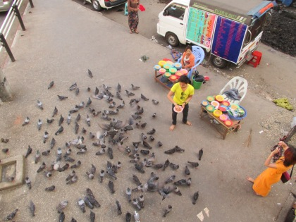 You could buy corn to feed pigeons