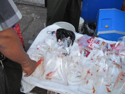 Or a fish to release (?). This stall was outside a cell phone store