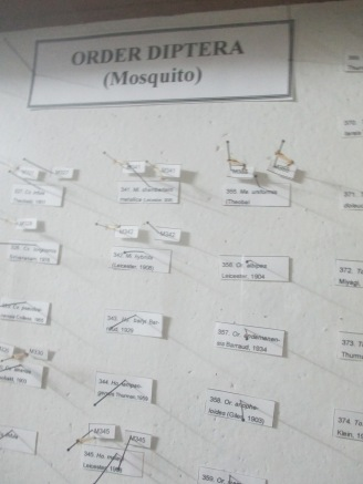 Who knew there with this many types of mosquitos?