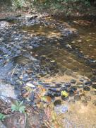 1000 lingas carved on the rock floor of the stream