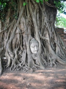 The Buddga image in a tree