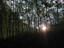 beautiful sun through the trees