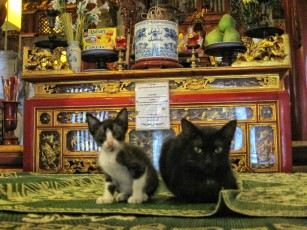 Two cats playing around in a temple in an assembly hall on jewelery street
