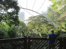 The aviary at Hong Kong Park