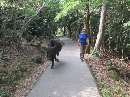 We were accompanied on one of the paths by a docile bull