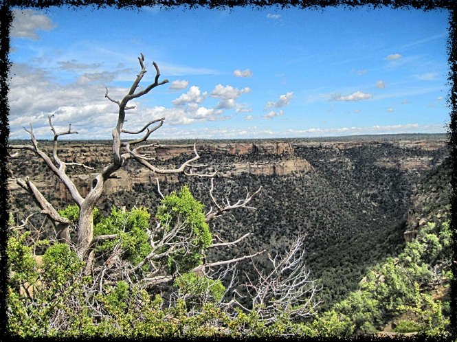 One of the canyons in Mesa Verde