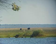 Elephants across the river - seen while enjoying a good beer