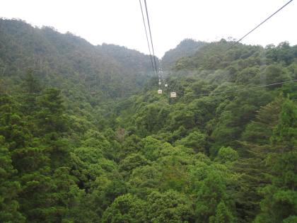 Looking up the ropeway